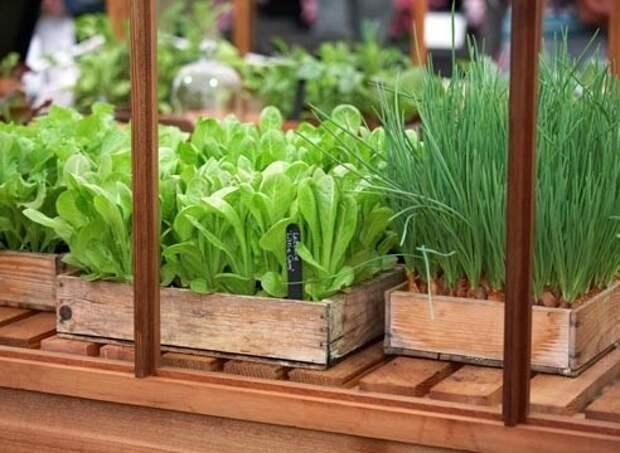 Выращивание зелени зимой в теплице