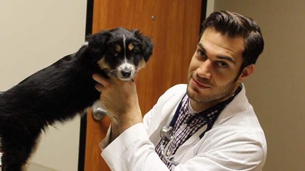 55.  ветеринар, красавец, мужчина