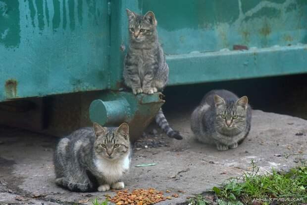 Как никогда просим вас о помощи!!! Эти малыши пропадают в пустом садоводстве...А из леса приходят лисы...