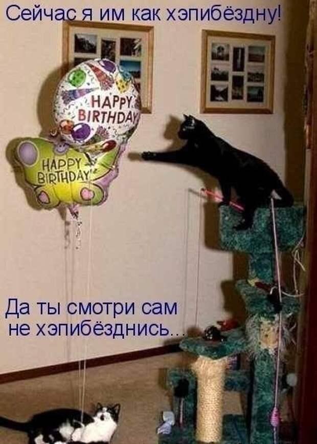 Кошачий фотопост! коты, юмор