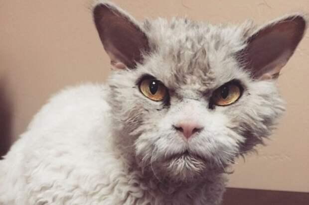 От кошек придется избавляться - ковид