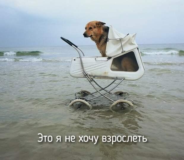 животные как собаки
