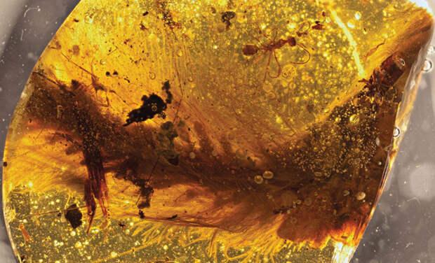 Янтарь с хвостом пернатого динозавра