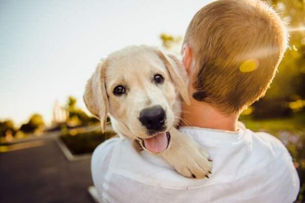 Человек и собака/Фотобанк