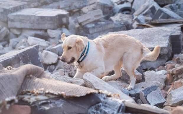 В Турции число жертв землетрясения выросло до 12 человек