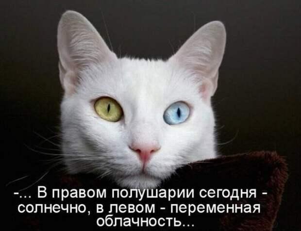Белая кошка с разноцветными глазами обои - с размерами 1680 x 1050 px скачать бесплатно.