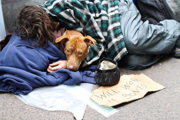 12. Мужчина с собакой в Зукотти-парк бездомный, любовь, собака