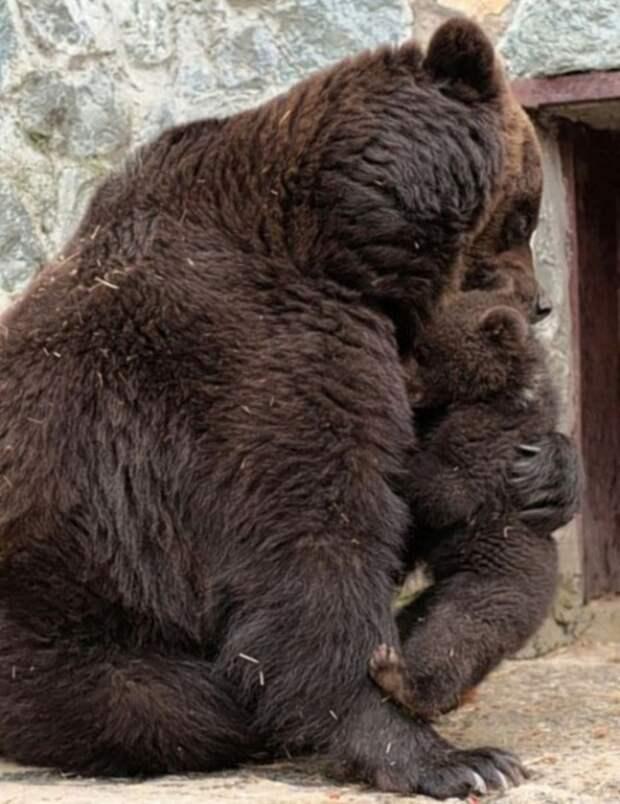 Строгая мама звери, зоопарк, медведи