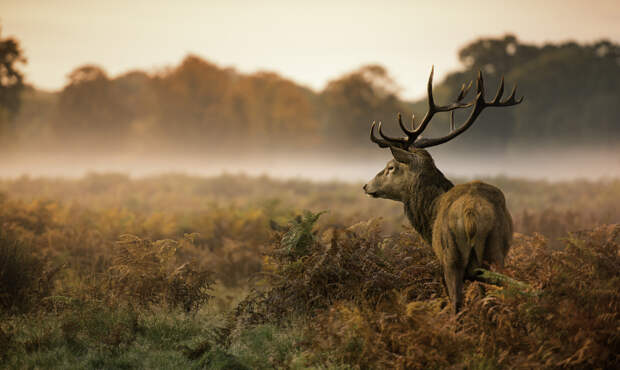 luchshie fotografii dikoy prirody 12