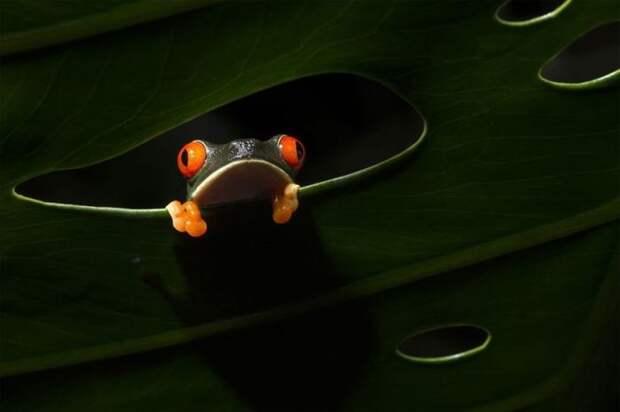 В Коста-Рике. Автор фотографии: Сальвадор Колве (Salvador Colvee).
