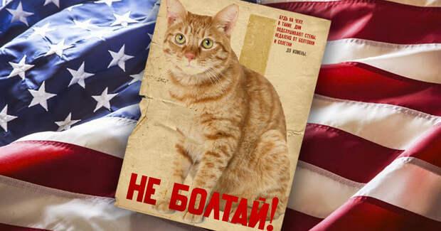 Однажды агенты ЦРУ натренировали кошку, чтобы она шпионила за СССР