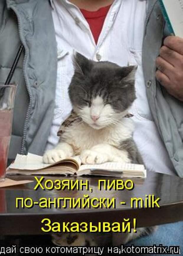 Котоматрица: Хозяин, пиво  по-английски - milk Заказывай!