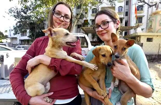 бездомные собаки из приюта для животных