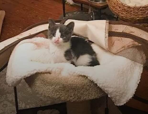 Котенок в кроватке