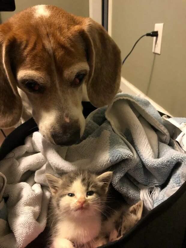 Новый друг и охранник