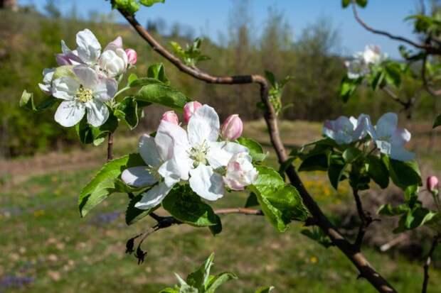 чем обрабатывать сад после цветения