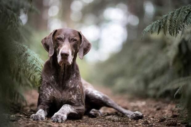 Третье место в категории «Старички» великобритания, животные, интересное, конкурс, собака, собаки