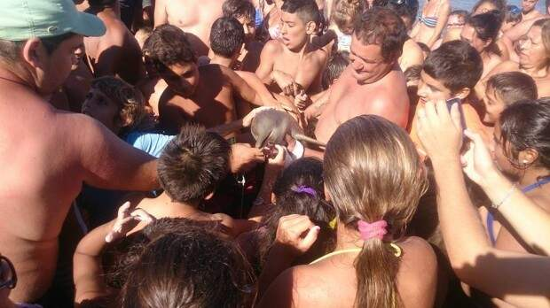 Туристы насмерть замучили дельфина ради селфи