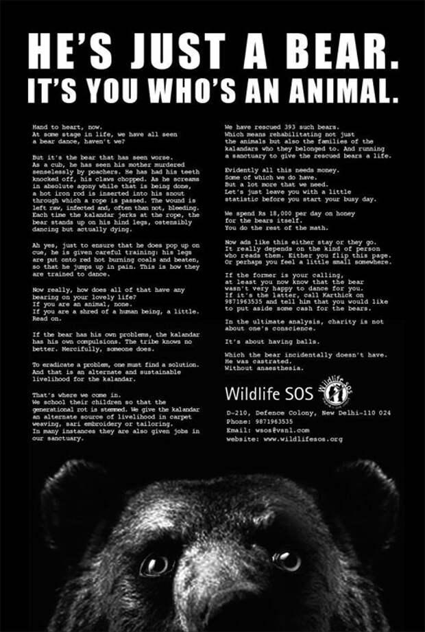 «Он – медведь. Ты – животное»: агрессивная экологическая реклама