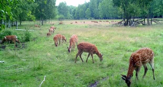15 редких соколов, 20 пятнистых оленей и 8 тысяч утят выпустили в дикую природу в рамках Года Экологии
