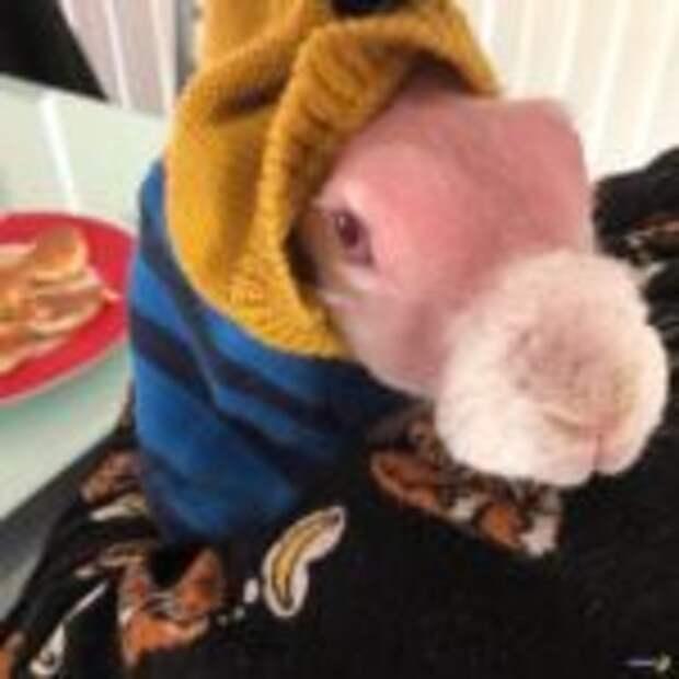 Лысый кролик стал настоящей звездой интернета