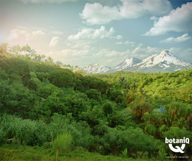 BotaniQ: новые тропические истории