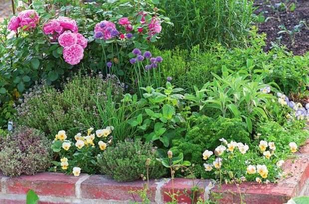 Приподнятый цветник на солнечном месте идеально подходит для большинства пряных трав. Среди тимьяна, мелиссы, шалфея и шнитт-лука цветет фиалка рогатая.