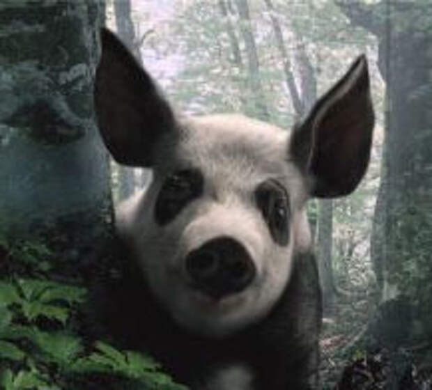 Pfizer Animal Health: даже последняя свинья…