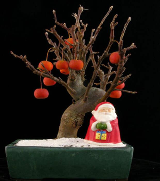 В Рунете открылась 3D-галерея деревьев бонсай