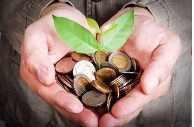 Какие растения и травы привлекают деньги?
