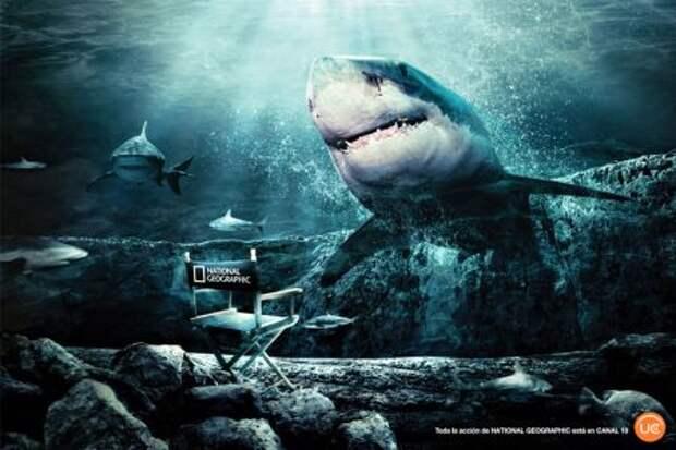 National Geographic ведет прямое включение из пасти акулы