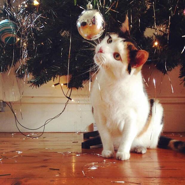17. Любопытно  елка, кошка, подборка