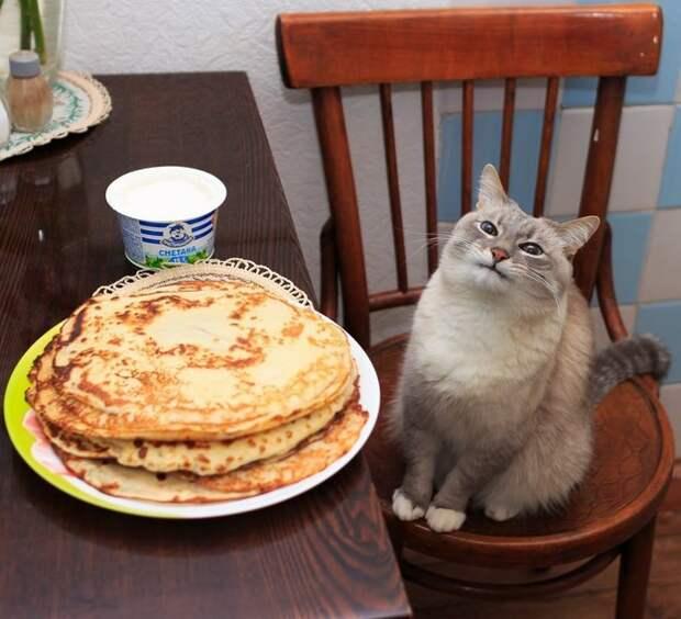 9. Этот кот был просто очень рад блинчикам  год, кот, событие