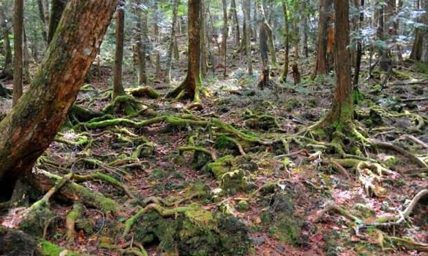 Аокигахара - лес самоубийц в Японии