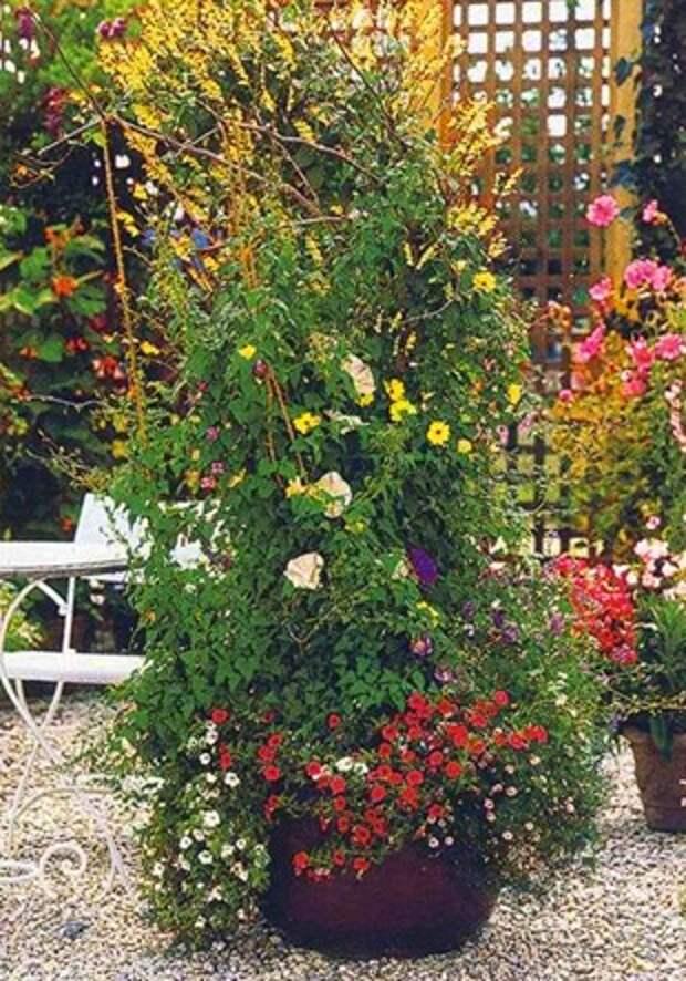 Живая стена в саду. Садовые ширмы из цветов — фото.