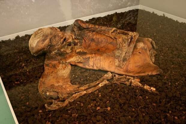 Загадки европейских болотных мумий: казненные преступники или принесенные в жертву нечестивцы?