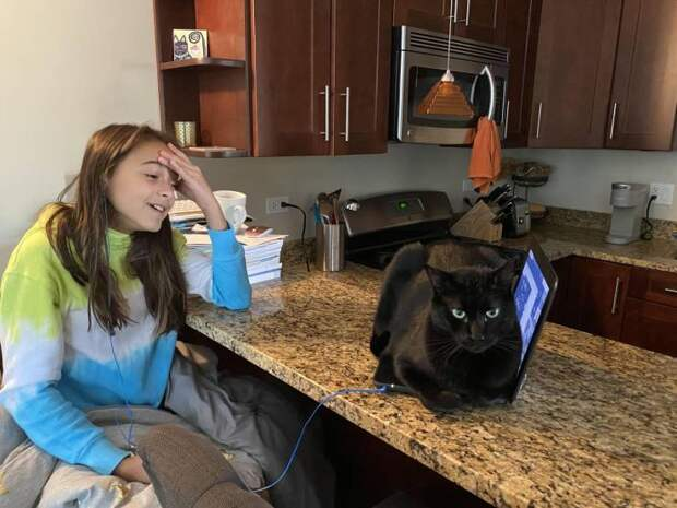 Кот сидит на ноутбуке