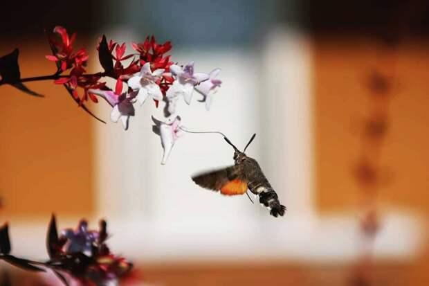 Языкан - один из немногих летающих созданий, который научился летать задом наперёд.