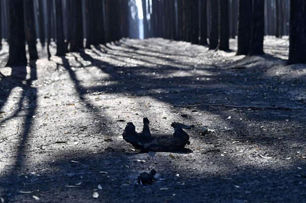 Кадры спасения пострадавших животных в Австралии