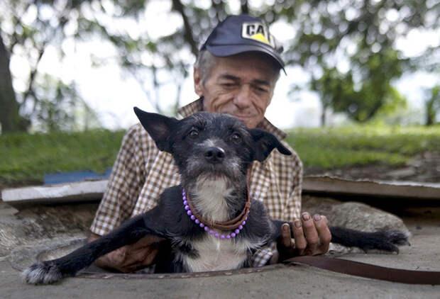 21. Бездомный помогает любимцу выбраться из канализационной трубы, в которой они живут  бездомный, любовь, собака