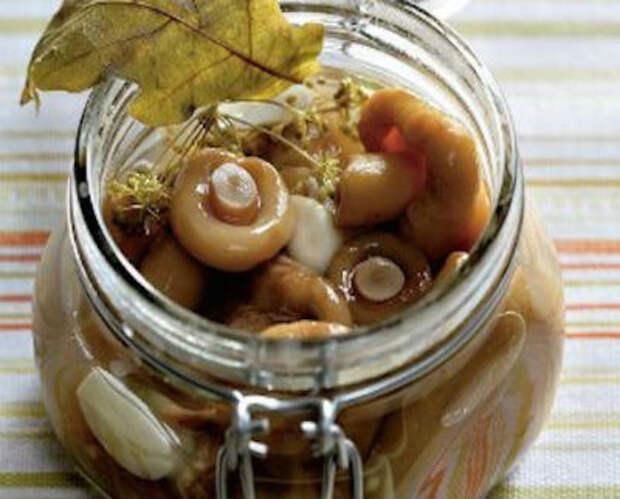 Засолка грибов на зиму в банках, способы и рецепты