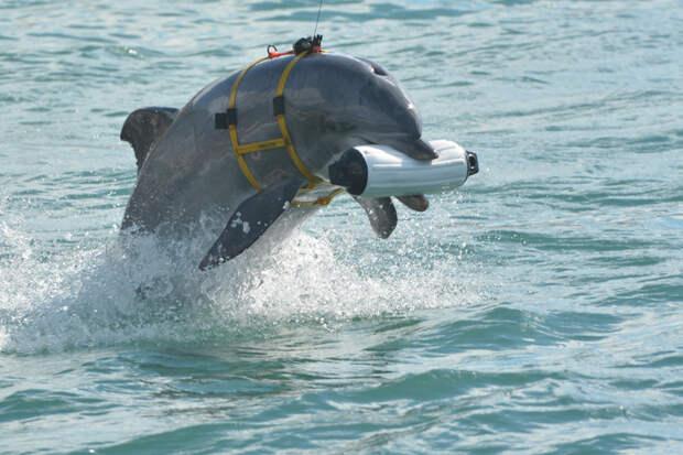 Самые необычные примеры использования боевых животных Боевые животные, животные, история