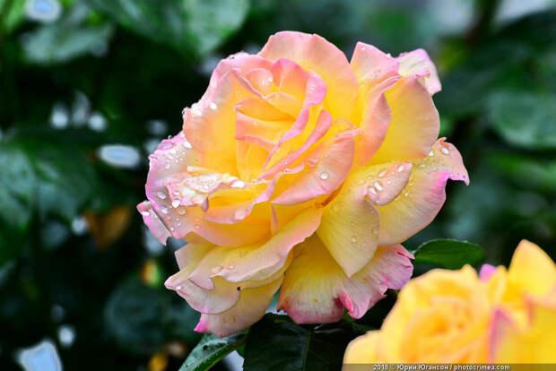 Розово-ирисный Севастополь