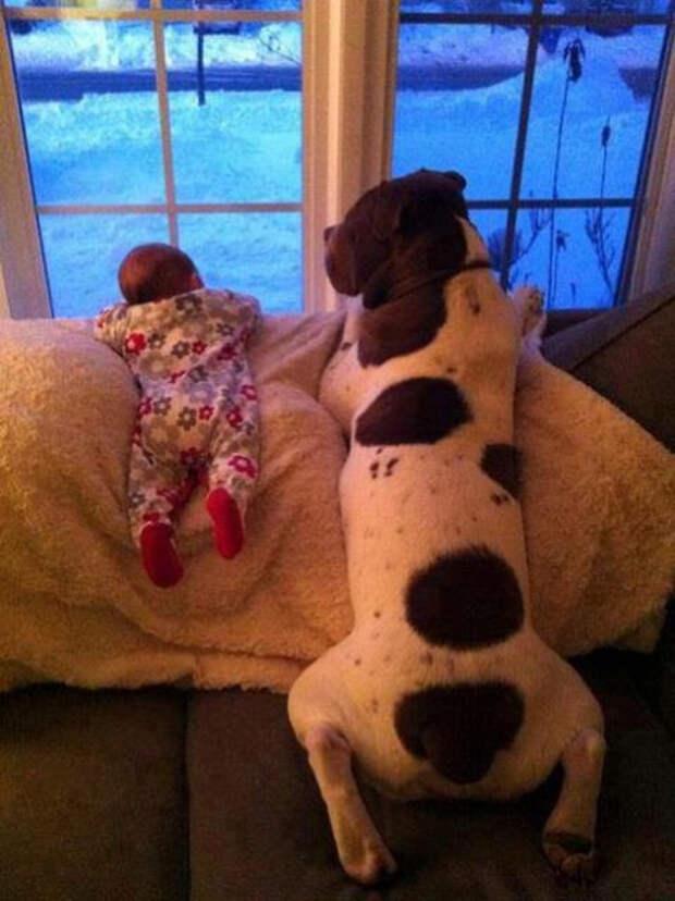 дети должны расти с домашними животными (4)