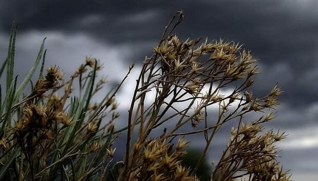 МЧС предупредило жителей Подмосковья о грозе и сильном ветре вечером в субботу