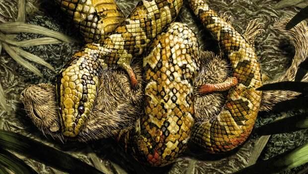 Палеонтологи выяснили, как змеи лишились ног и начали ползать по земле