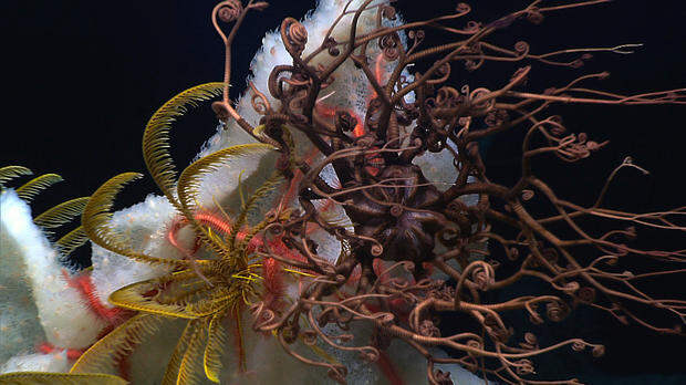 Морские организмы