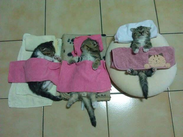 40. Маленькие друзья котенок, сон