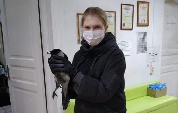 Мать с дочерью из Северного Медведкова спасли ворону после огнестрела