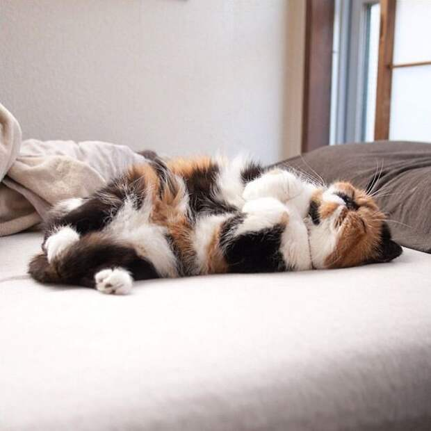 48. Всем нужен сон котенок, сон